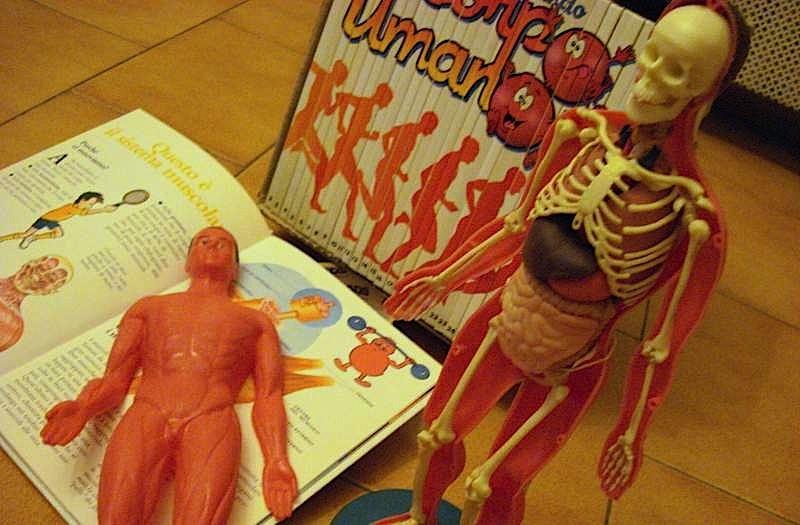 eslorando_il_corpo_umano_scheletro