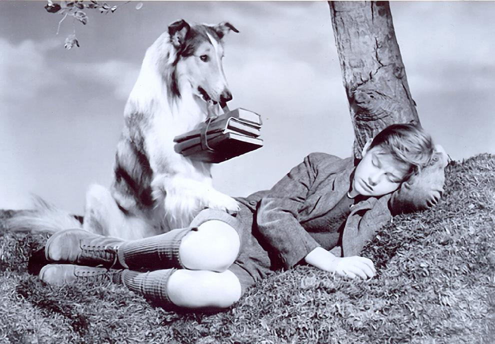 lassie serie tv