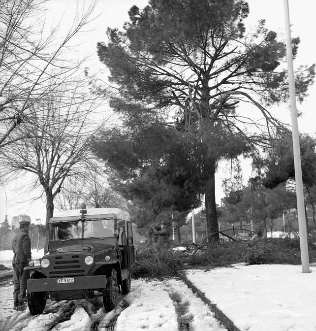 Nevicata del 1971 caduta alberi