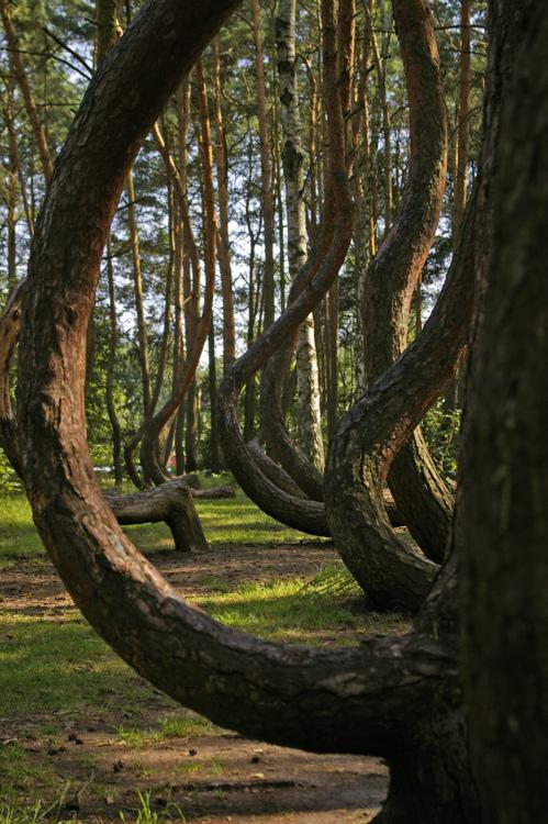 Crooke Forest - Particolare ramo