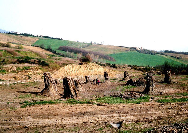 La foresta fossile di Dunarobba, nella seconda metà degli anni '80.