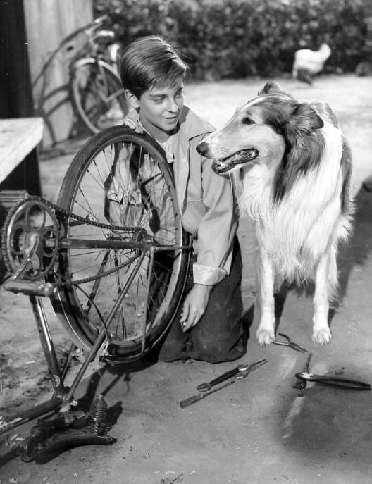 Tommy Retting Jeff Miller Lassie 1954 1957 Serie Tv Anni 60