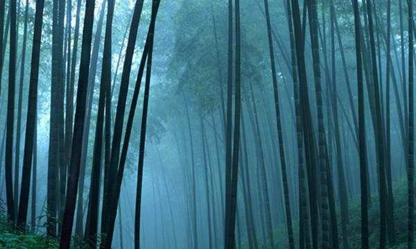 Luoghi Misteriosi: FORESTA DI HEI ZHY GOU – (Cina)