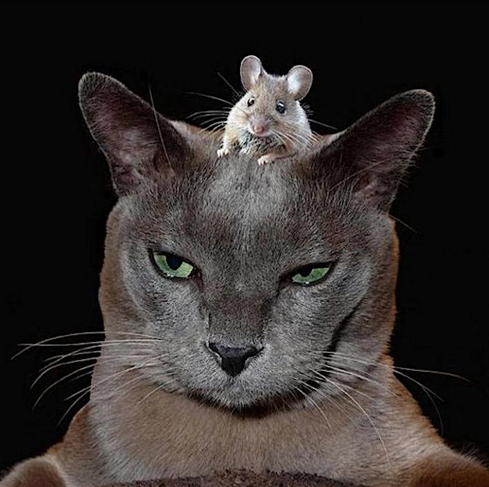 barzelletta gatto topo