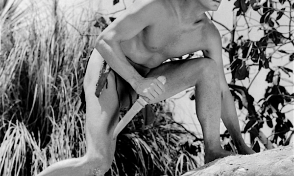 TARZAN Il Re della giungla – (dal 1912)