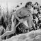 &nbsp;<center> TARZAN Il Re della giungla - (dal 1912)
